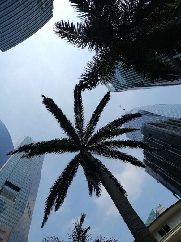 Palmy i wieżowce