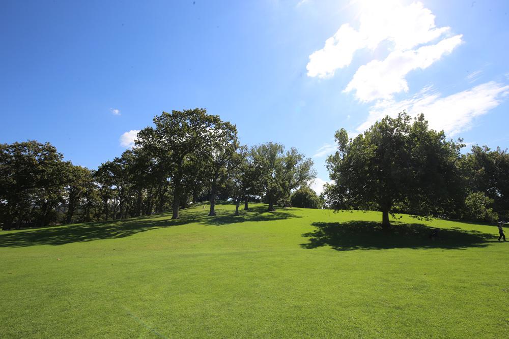 Park w Auckland