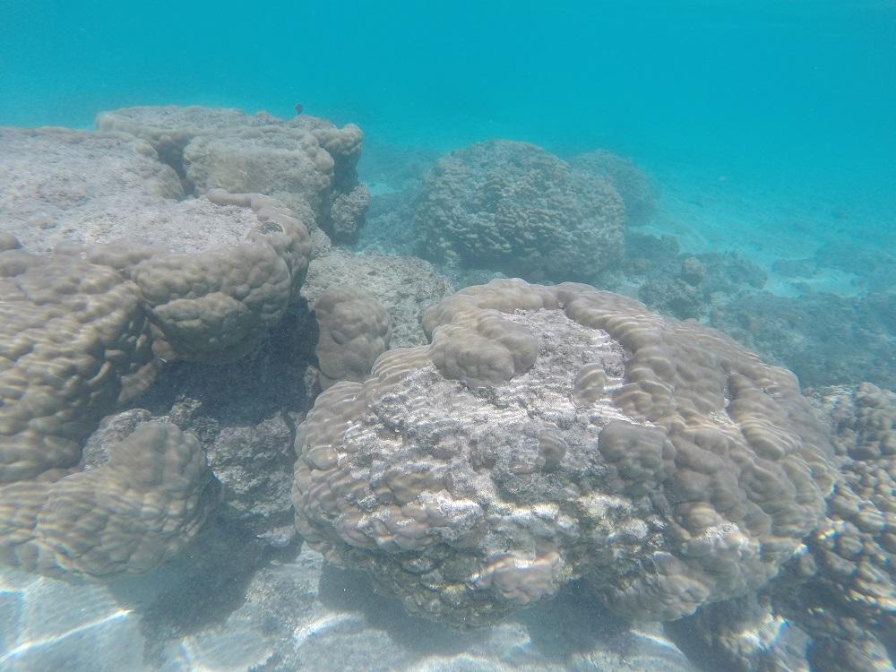 Rarotonga, Wyspy Cook'a